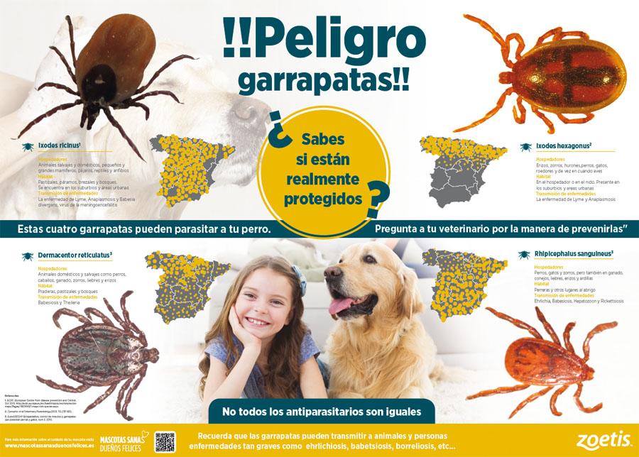 las-garrapatas-de-nuestros-perros-pueden-transmitirnos-graves-enfermedades